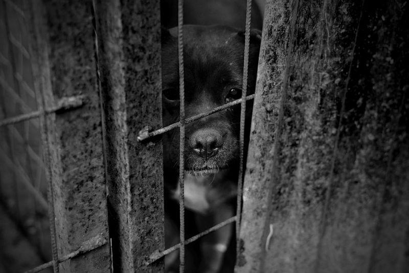 Dog Prison Pet Shelterdogs Shelter Dog Prison Alone Goback GoBackHome Trapped Cage Horror Pet Collar
