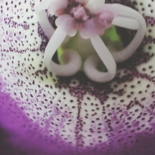 Flower Nature Freshness Pink Color Reshasuper Followme Top Freedom Sun Sky Flower Head Sunlight