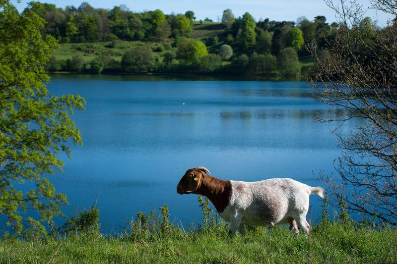 Beauty In Nature Eifel Eifel Germany EyeEm Nature Lover Goat Lake Scenics Standing Weinfelder Maar