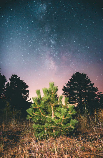 Pine tree and milkyway, Volcano Etna Sicily Pine Tree Stars Milky Way Plant Tree Night Star - Space Sky Growth Tranquility Beauty In Nature Tranquil Scene Scenics - Nature Field Land Space Astronomy Nature No People Landscape Star Environment Green Color Outdoors Etna