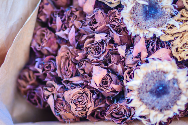 Dried wedding roses flower bouquet background. Close up bouquet of dried withered roses. Dried Rose Flower Rose Petals Abundance Beauty In Nature Bouquet Dried Rose Dried Roses Dry Flower Flower Arrangement Flower Head Flowering Plant High Angle View Rose - Flower