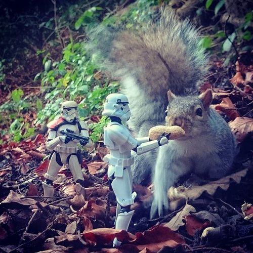 Norm is doing a good deed for Christmas and feeding the local wildlife, captain Ryan is a little more weary and keeps it covered just in case. Toyptoyphotography Toyoutsiders Toydiscovery Starwarselite Starwarsblackseries Stormtroopers Normanthetrooper Captainryan Epictoyart Toy_syn Toptoyphotos Wheretoysdwell_photofeatures Wheretoysdwell Saltwellpark Toysplaying Toygroup_alliance Tga_best_of_2015 Toyslagram Toyslagram_best_2015