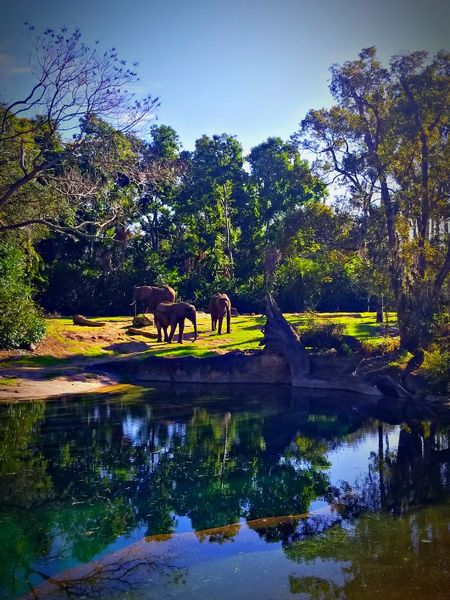 Safari Elephant Tree Reflection Water Nature Outdoors Day Beauty In Nature