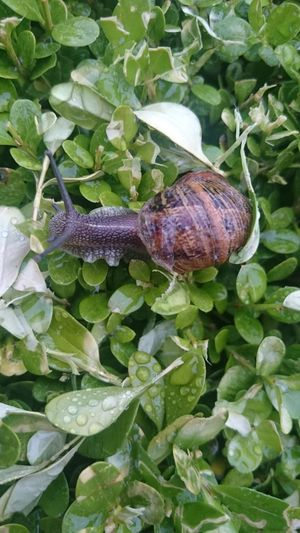 Snail Snails Pace Top Of The Snail World