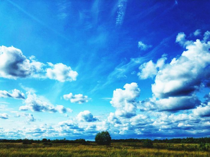Cloudy sky Clouds And Sky Cloudy Cloudy Day Clouds Clouds And Sky Summertime Cloud - Sky Sky Tranquil Scene Beauty In Nature Tranquility Landscape Environment Scenics - Nature Blue Plant Field No People Land Nature Day Tree Growth Outdoors Rural Scene Agriculture