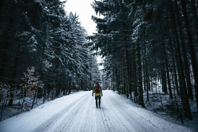 Rear View Of Man Walking On Snow Covered Road In Forest