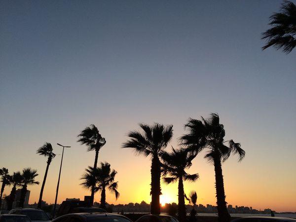 Sunset :)) Alexandria, Egypt Sea Sun Sunset Palm Alexandria Palm Tree Sky First Eyeem Photo