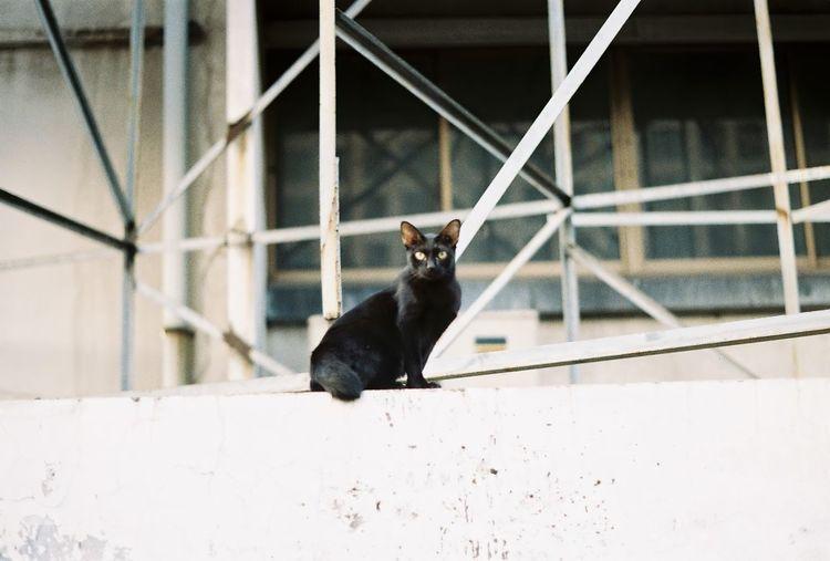 Black cat looking away