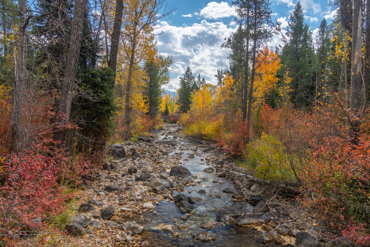 Stream amidst trees in forest during autumn