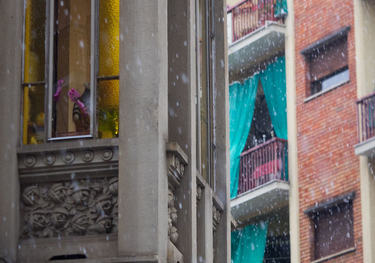 Building Exterior Architecture Built Structure Window City Glass - Material Building Flower Day No People Flowering Plant Transparent Nature Outdoors Plant Wet Close-up Residential District Rain Snowing