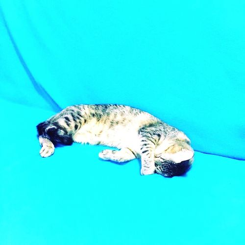 He'srealtired Nachos Pets Animal Themes Cat♡ Cats 🐱 Catlover Sleeping Cat Tiredcat