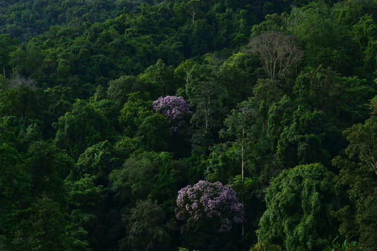 High angle view of flowering plants by trees in forest