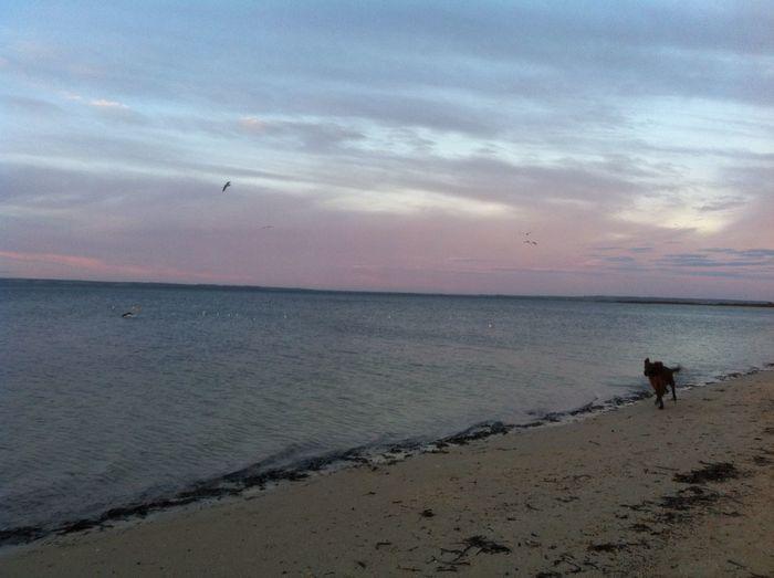 Run Landscape Beach Trip