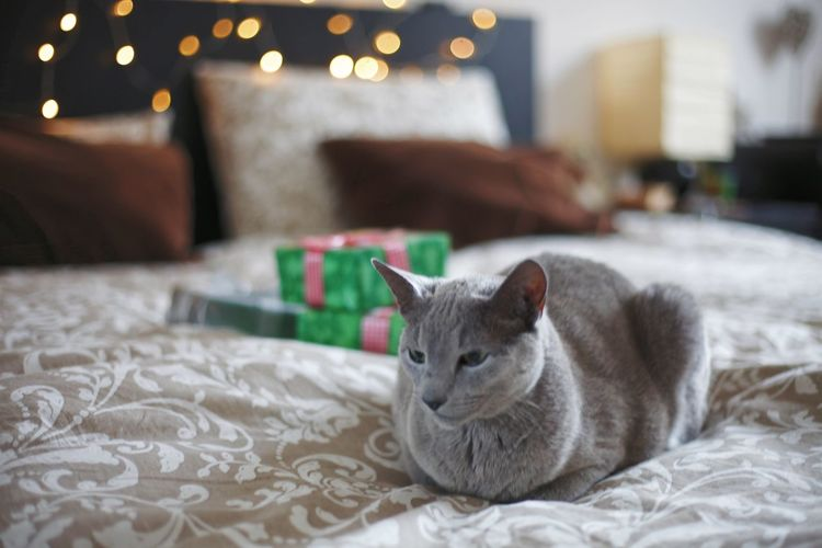 Cat resting on bed at home