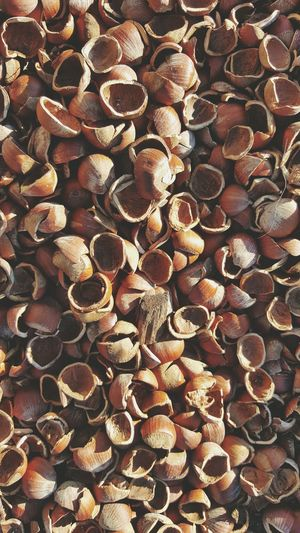 Their broken bodies lay strewn across the floor... Chestnuts Shells Hollow Nuts Ground Cover Gardening EyeEm Nature Lover Food Snacks Broken Cracked First Eyeem Photo Showcase April