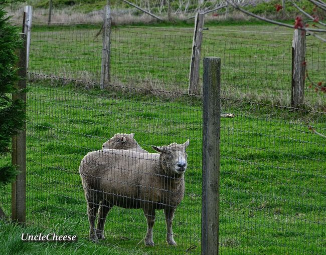Happy Fence