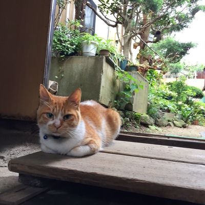 Cat Pet タロー