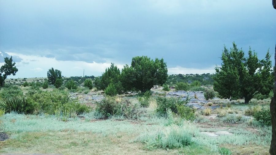 New Mexico Tree Cloud - Sky Day Outdoors Nature Pine Tree Landscape Pinaceae No People Sky Grass Beauty In Nature