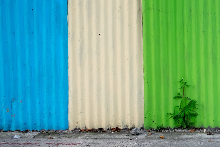 Plant The Street Photographer - 2018 EyeEm Awards The Week on EyeEm Green Color No People Outdoors Streetphotography Wall