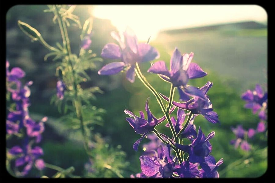 The sun was shining bright, and then? It stopped. Flower Fantasy