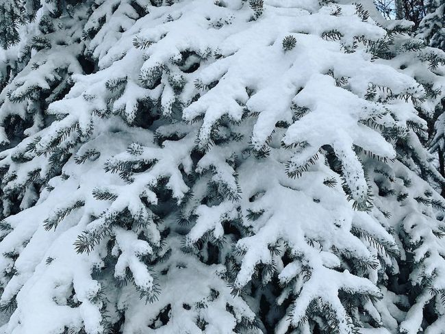 a good amount of fresh snow. 🏔❄️✨ Wasatch County Wasatch Back Utah Snow Winter Cold Temperature White Color Nature No People Beauty In Nature