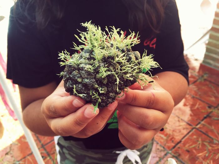 EyeEmNewHere Moss & Lichen Pinecone Liquen Moss Holding Real People One Person Human Hand Plant Nature Close-up Growth