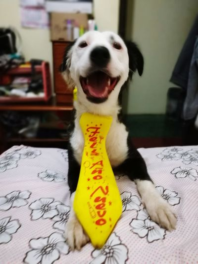 Ashly🖤🖤 Dog Text One Animal Domestic Animals Mammal Animal Themes