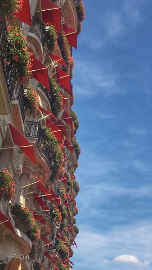 Sky Low Angle View Built Structure Architecture Cloud - Sky Decoration No People Building Exterior Nature Building Multi Colored Outdoors Plant
