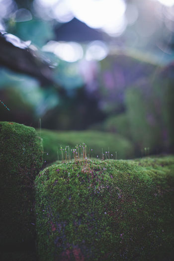 Moss in the