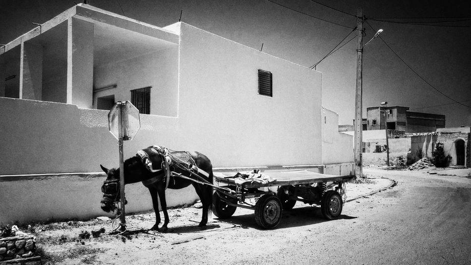 Hello World Tunisia Eyeemphotography Eyeemtunisia Streetphotographer Streetphotography Blackandwhite Black&white Tunisie Noiretblanc