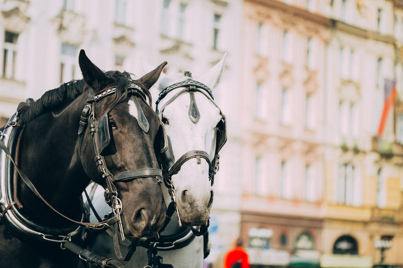 Close-Up Of Horses Against Building