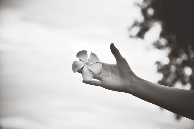 Hand holding flower against sky