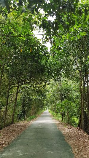 Tree Road Green color pathway long empty road the way forward Country Road vanishing point Tree Road Green Color Pathway Long Empty Road The Way Forward Country Road Countryside A New Beginning