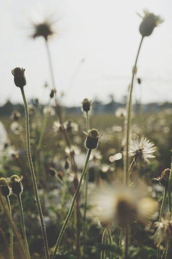 Flower grass.