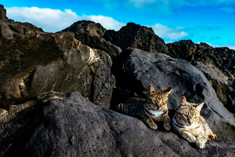Cats Sitting On Rocks Against Blue Sky During Sunny Day