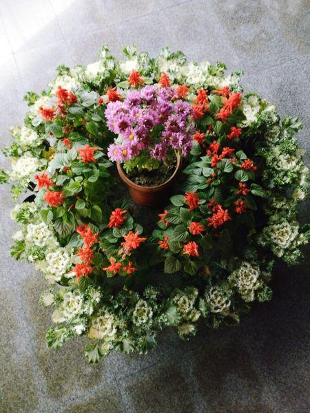 Flowers Outdoors Freshness Blooming Standing Nature Heart Shape White Color White Flower Flowerpots
