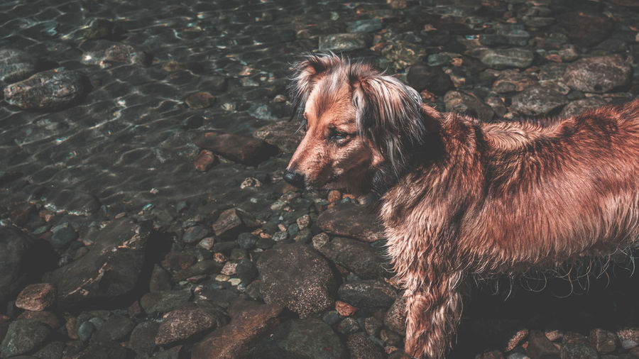 Animal Animal Themes One Animal Mammal Domestic Pets Domestic Animals Vertebrate Canine Dog No People Land Day Nature Brown Standing Animal Wildlife Outdoors High Angle View Herbivorous Rocks