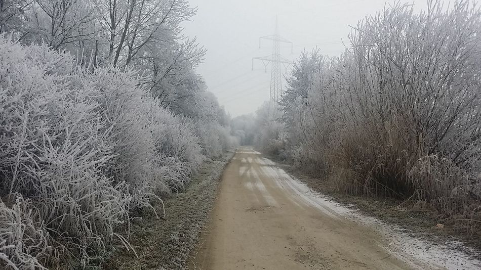 Cold Temperature Winter Fog Road No People