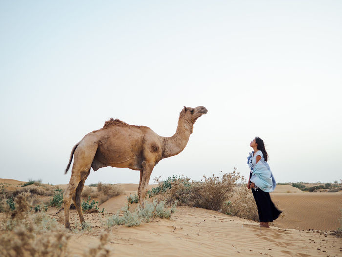 Side View Of Mid Adult Woman Standing By Camel While Standing At Desert Against Clear Sky