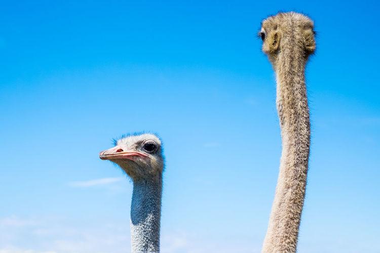 Close-up portrait of bird against blue sky
