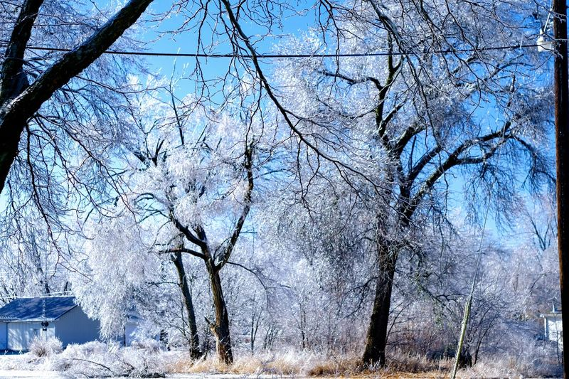 """Visual Journal January 17, 2017 Western, Nebraska - 15 and 16 January 2017 Ice Storm - Over the course of 15 and 16 January 2017, an upper-level storm system tracked from northwest Mexico into the central Plains. A seasonably moist low-level air mass present ahead of the upper-air disturbance surged north through the Great Plains, atop a sub-freezing, near-surface layer of air. The net result was a widespread ice storm which affected locations from the southern High Plains into the mid Missouri River Valley. This winter storm was unusual from the perspective that the predominant precipitation type was freezing rain with little in the way of observed snowfall. Over eastern Nebraska and southwest Iowa, ice accumulations ranged from 0.50-0.75"""" across southeast Nebraska to 0.10-0.20"""" in the Omaha Metro area. Bare Tree Beauty In Nature Camera Work Canon FD 50mm F/1.8 Cold Temperature Extreme Weather Eye 4 Photography EyeEm Gallery FUJIFILM X-T1 Ice Storm Icy Day Manual Focus My Neighborhood Nebraska Weather Photo Diary Photo Essay Photography Rural America Scenics Small Town Stories Storytelling Visual Journal Winter Winter Winter Wonderland"""