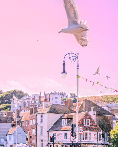 Pretty Hastings Dreamy Pink Pink Sky Birds In Flight Seagulls Cityscape Seascape Old Town City Cityscape Urban Skyline Flying Pink Color Motion Sky EyeEmNewHere
