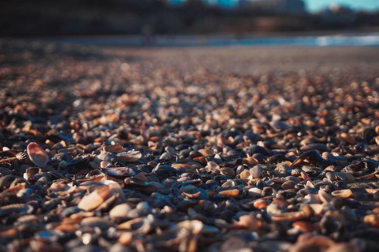 Seashells At Beach