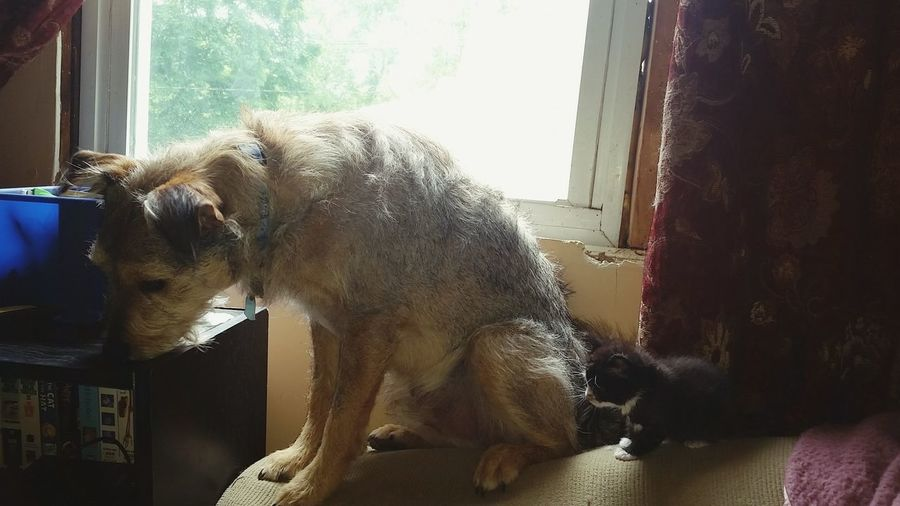 Foster Dad My Dogs Are Cooler Than Your Kids Rescuedkitten Love Of Animals Furbaby