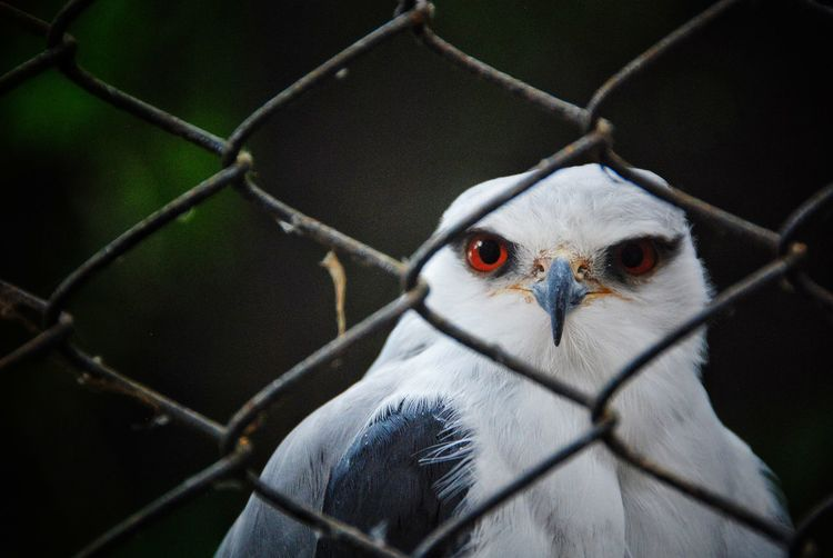Portrait of a bird on chainlink fence