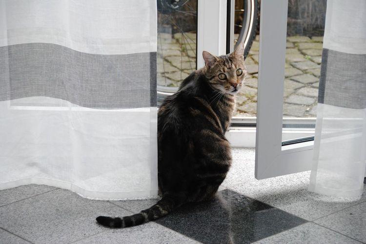 Portrait of cat by door sitting on floor at home
