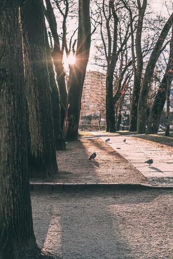 Leading Lines Stavanger Tree Trees Backlit Pidgeon  Pidgeons Shadow Silouette Sunset