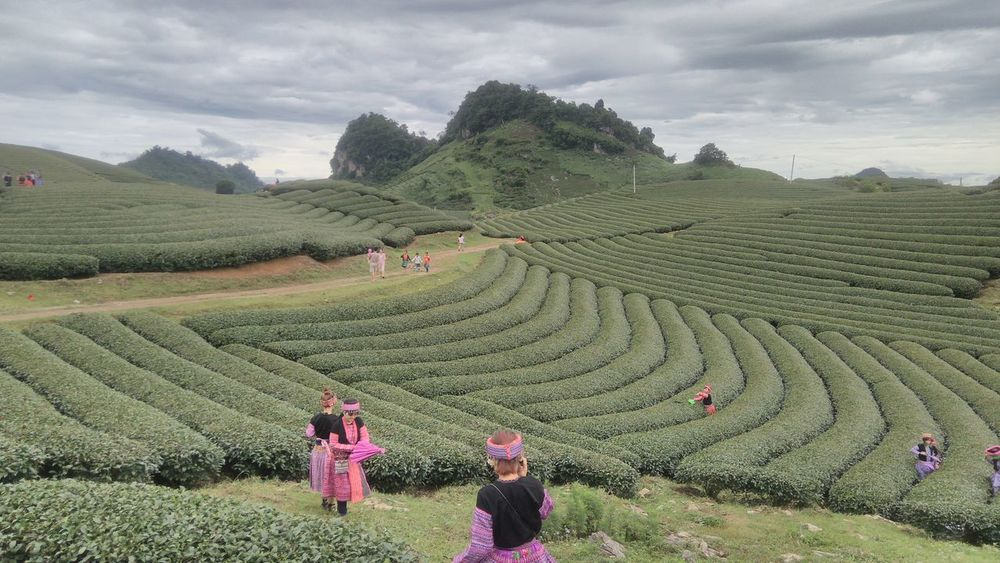 Agriculture Beauty In Nature Cloud - Sky Day Farm Landscape Mountain Nature Outdoors People Plantation Rice Paddy Tea Crop Terraced Field Travel Destinations