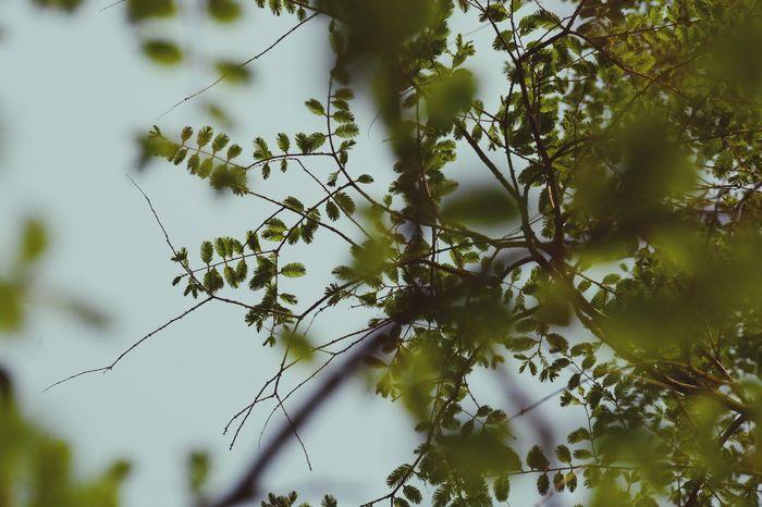 EyeEm Nature Lover Green Green Green Green!  Green Leaves Green Color Urban Spring Fever