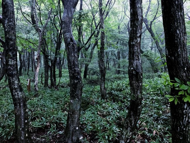 JEJU ISLAND  Forest Tree Tree Trunk Nature Beauty In Nature Tranquility Tranquil Scene Green Color Outdoors Tree Area